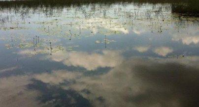swamp-at-rocky-point.jpg